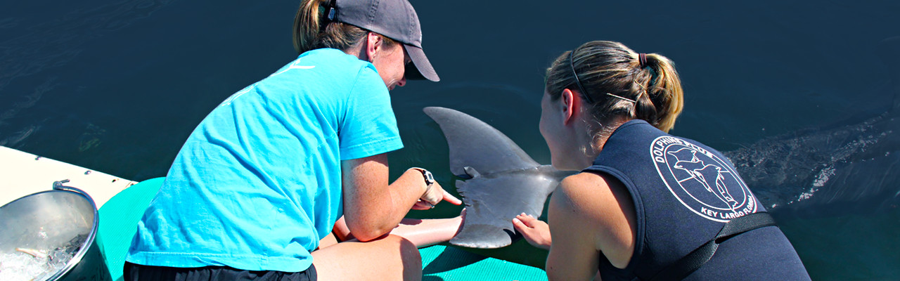Dolphins Plus marine biologist for a day program