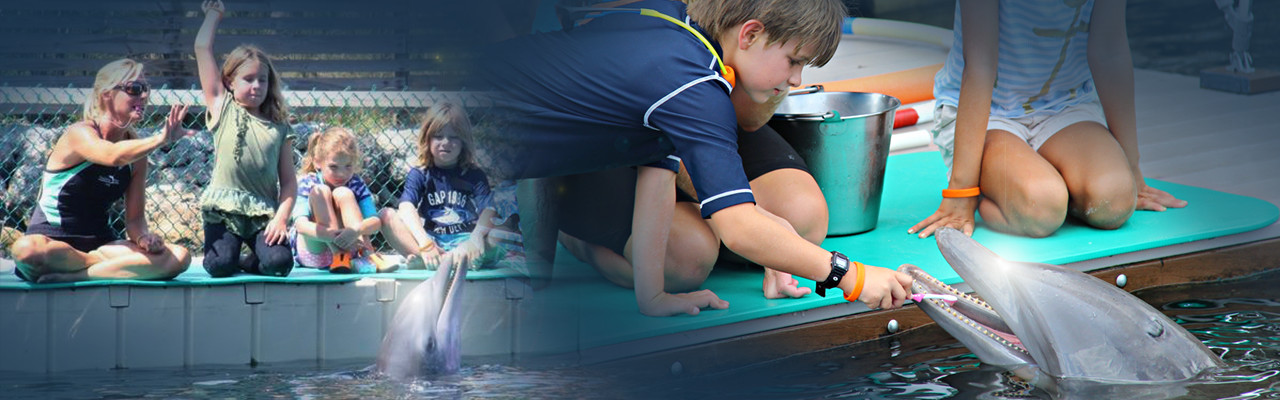 Dolphins Plus school groups programs
