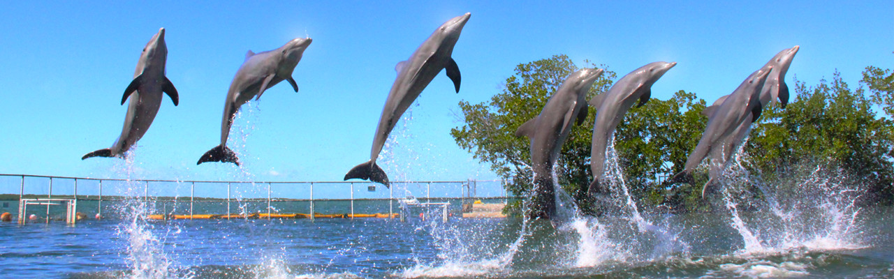 Dolphins Plus dolphin facts