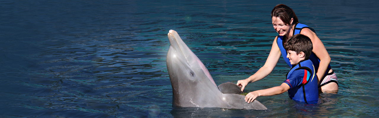 Meet the Dolphins Plus marine mammal family