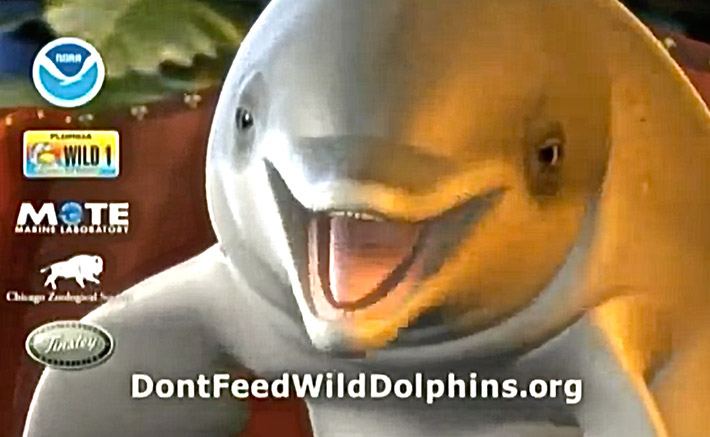 Can I feed wild dolphins