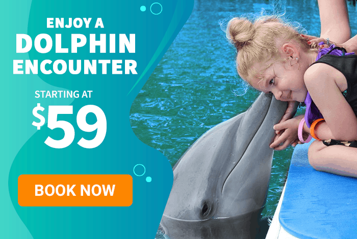 Enjoy a Dolphin Encounter starting at $59. Book Now.