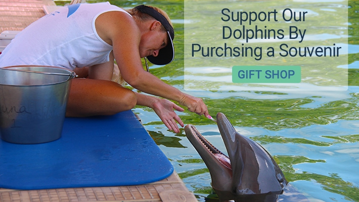 Support Our Dolphins By Purchasing a Souvenir. Gift Shop.