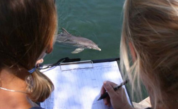 Dolphins Plus research internship 1