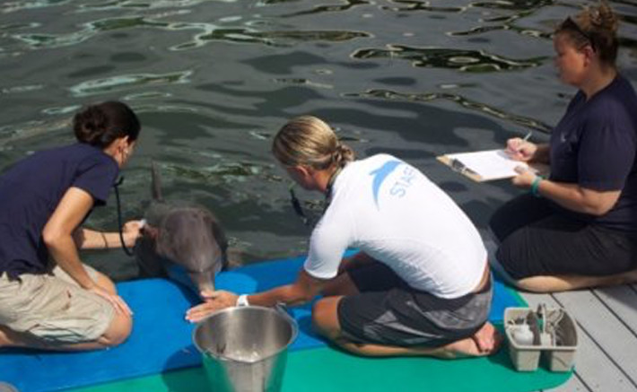 Dolphins Plus veterinary internship 1