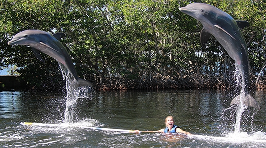 Woman in the water with two dolphins jumping into the air