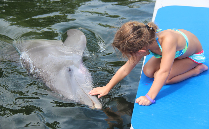 Dolphin with girl