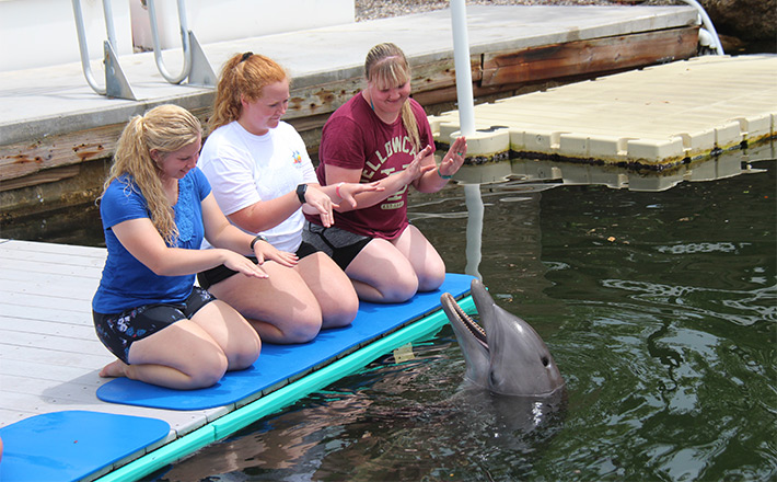 Dolphin Dockside