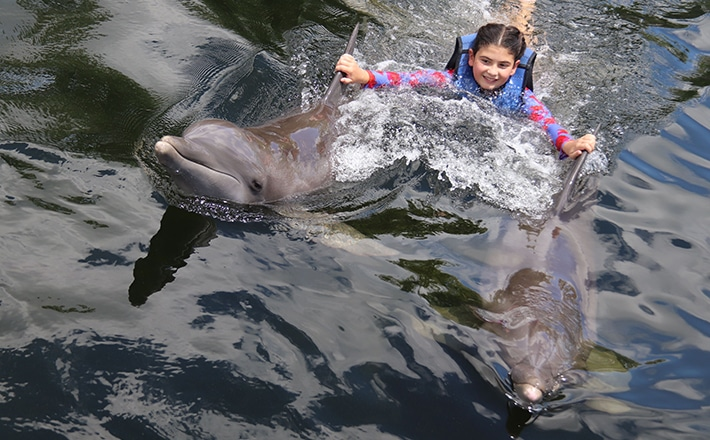 Girl getting a dorsal fin tow from two dolphins