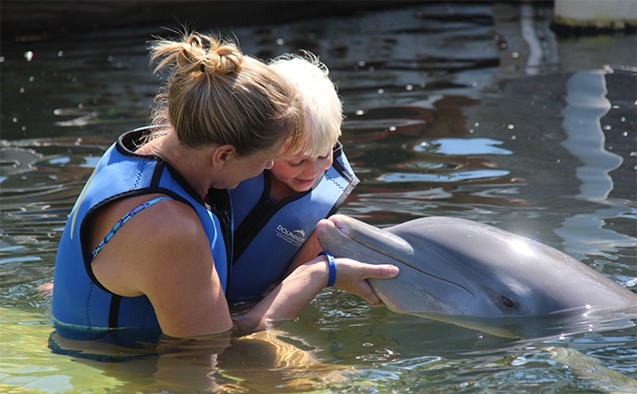 Woman holding her son while they touch a dolphin