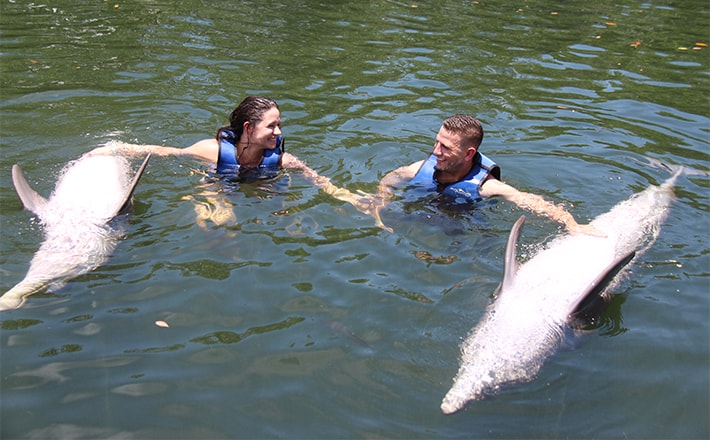 Couple in the water rubbing dolphins' bellies