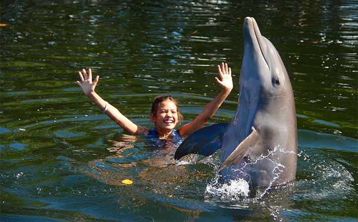 Girl in the water next to a dolphin