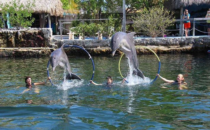 Structured swim with dolphins hoop jump