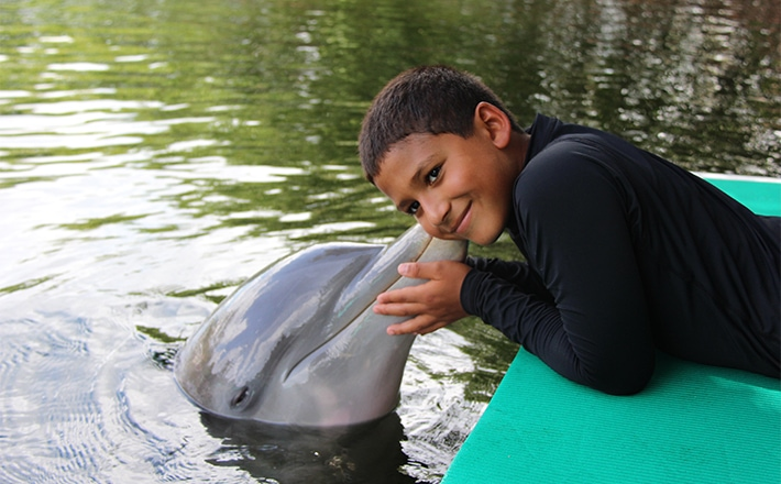 Boy getting a kiss from a dolphin