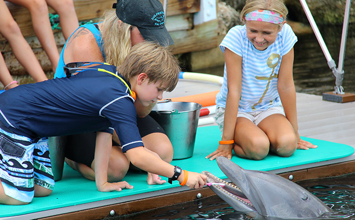 Dolphins Plus summer camp feeding dolphins