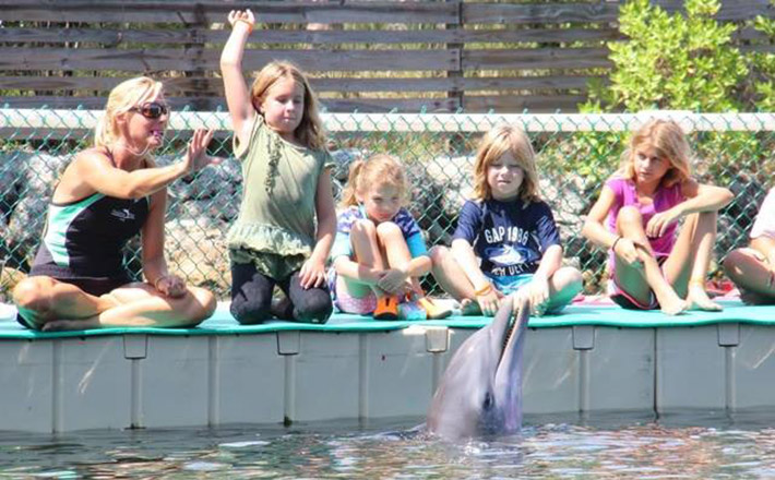 Dolphins Plus summer camp fun for kids