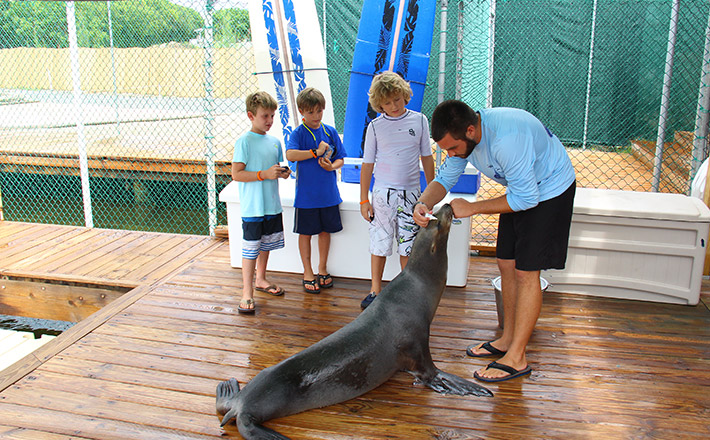 Dolphins Plus summer camp sea lions