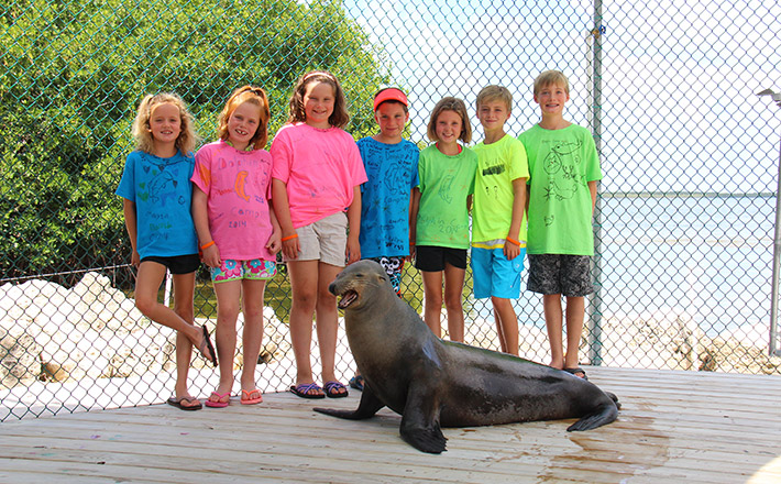 Dolphins Plus summer camp sea lion interaction