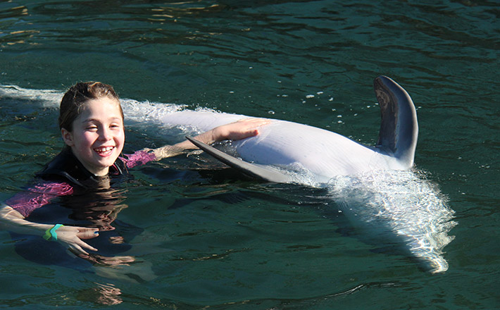 Dolphin trainer for a day belly rub