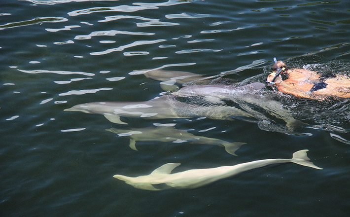 Dolphin trainer for a day full pod