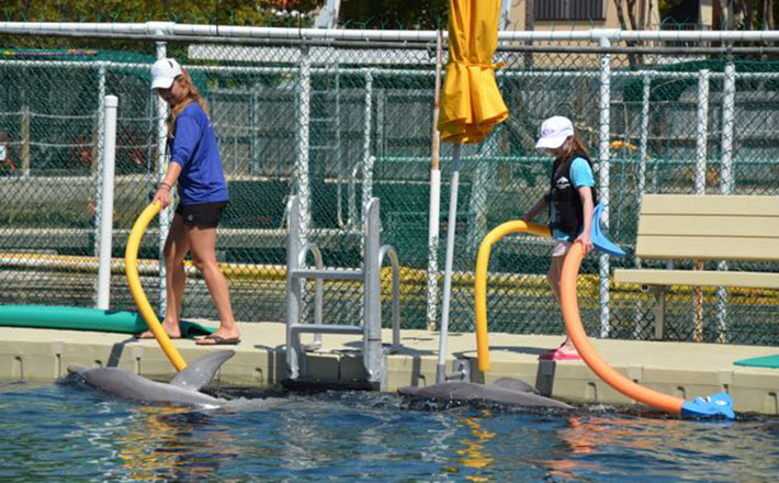 Dolphin trainer for a day dolphin program