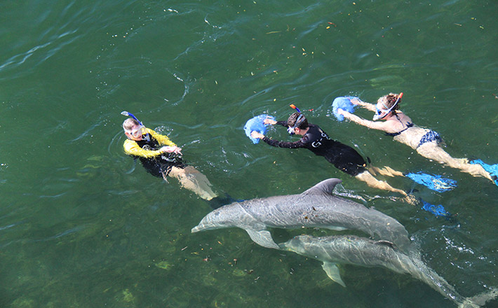 Guided swim with dolphin in natural setting