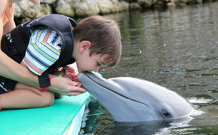 Kissed by a dolphin program