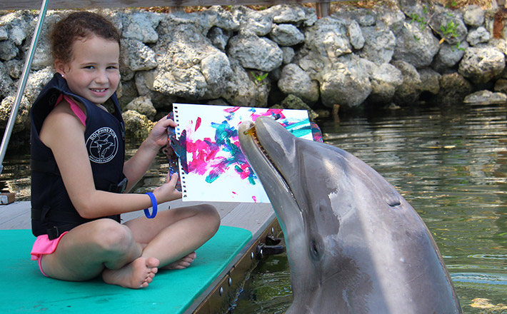 Painting with a dolphin program