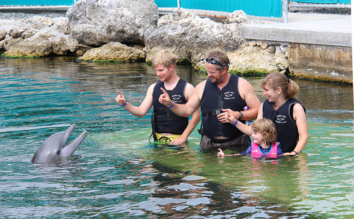 Shallow water dolphin encounter hold
