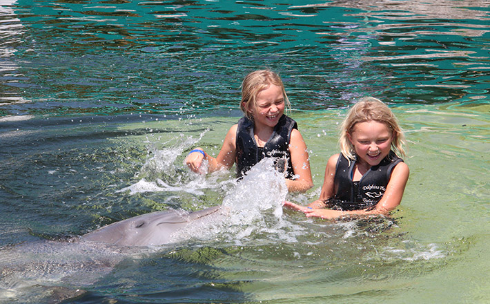 Shallow water dolphin encounter splash and play