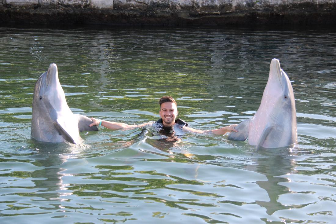 swimming with the dolphins photo gallery