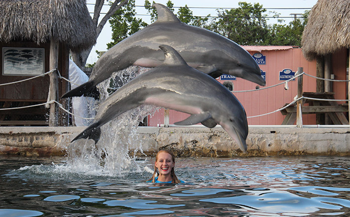 Dolphin animal care internship jump