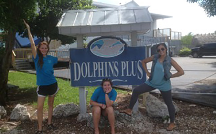 Dolphin research internship completion