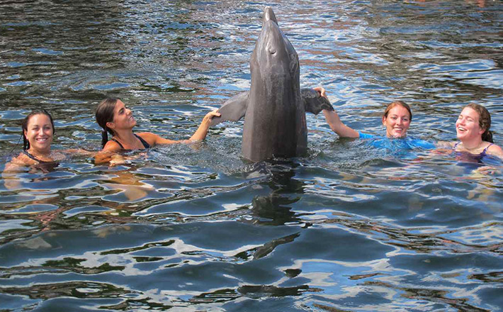 Dolphins Plus research internship dolphin interaction
