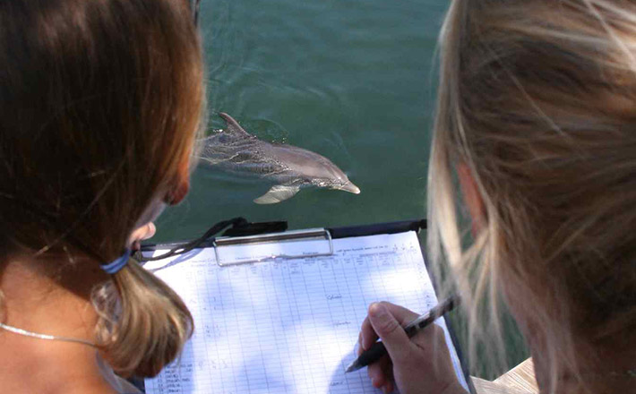 Dolphins Plus research internship studying