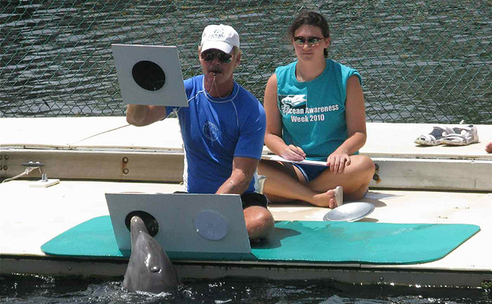 Learning at dolphin research internship