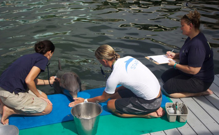 Dolphin veterinary internship interaction