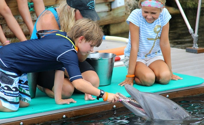 Boy brushing a dolphin's teeth while dockside