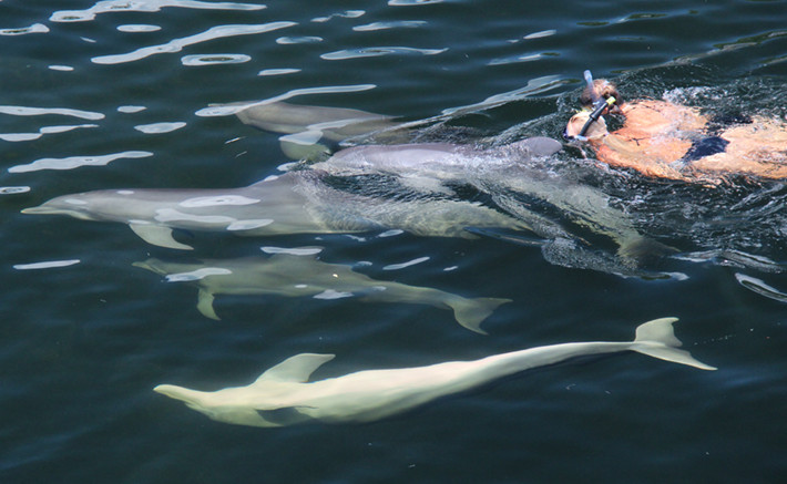 Dolphins Plus guided natural dolphin swim program 1