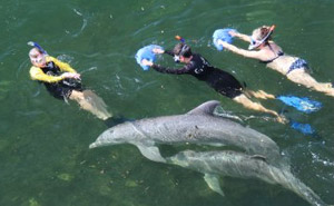 Guided Natural Dolphin Swim