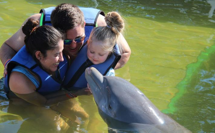 Family saying hello to a dolphin
