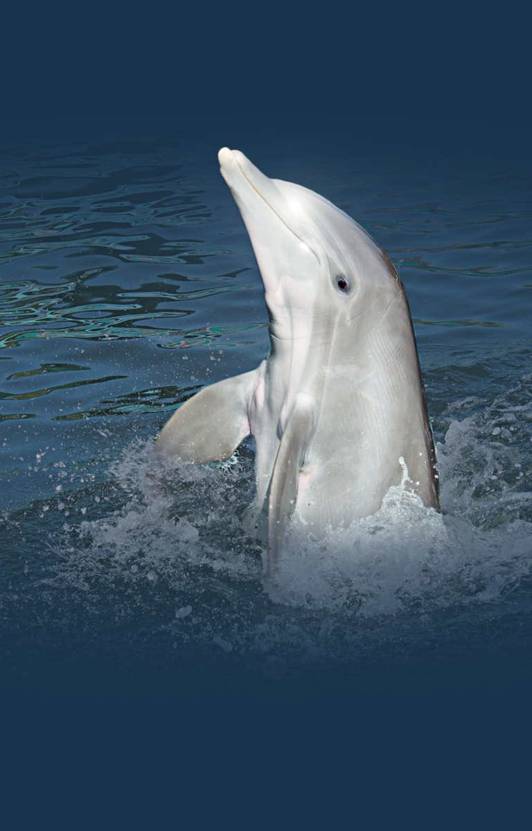Swim With The Dolphins In Key Largo Fl Dolphins Plus